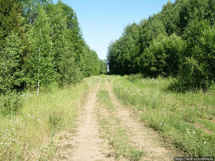 Слева за деревьями  дамба, она  полностью  заросла и  там  большие  колеи,  здесь  мало  кто  ездит  сейчас,  т.к. почти никто  не  живет. Уржум, Россия