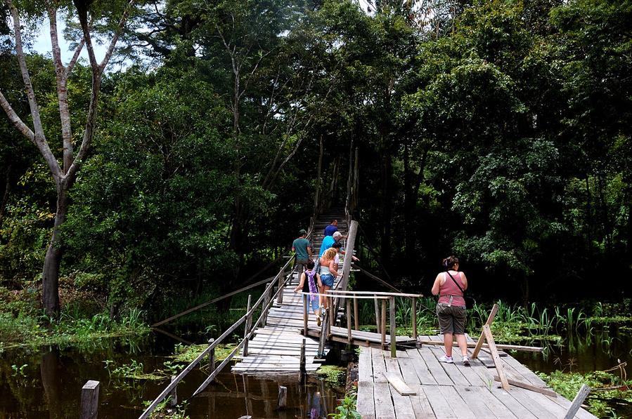 Экскурсия в джунгли