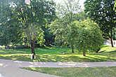 В парке можно посидеть-полежать или устроить пикник.
