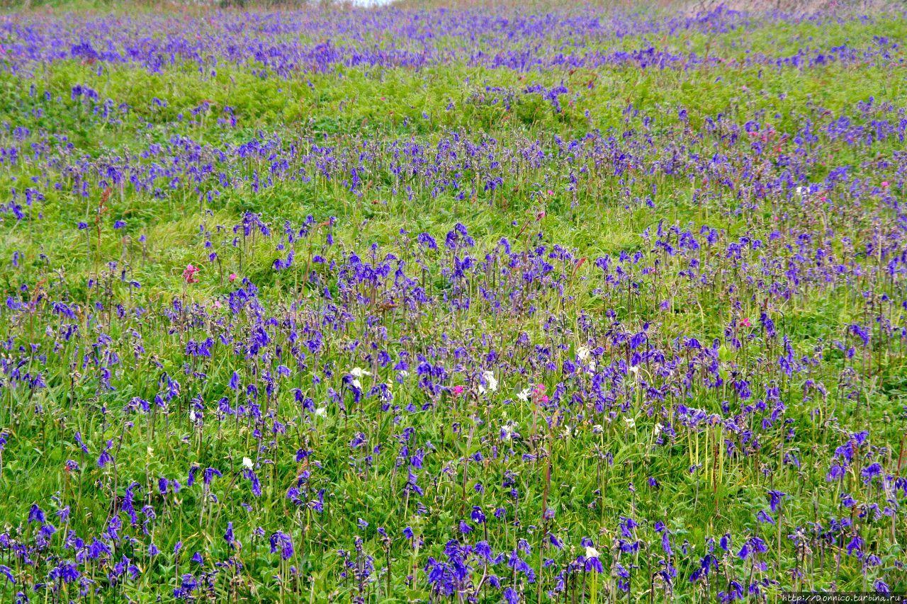 Природный парк Плейнмонт Плейнмонт, Гернси