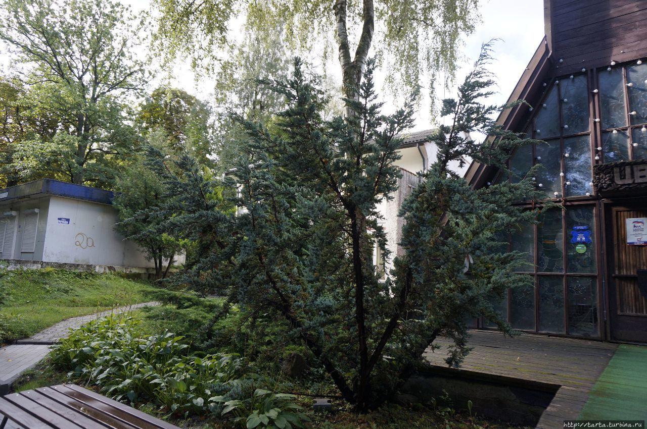 Город-сказка, город-сад… Светлогорск, Россия