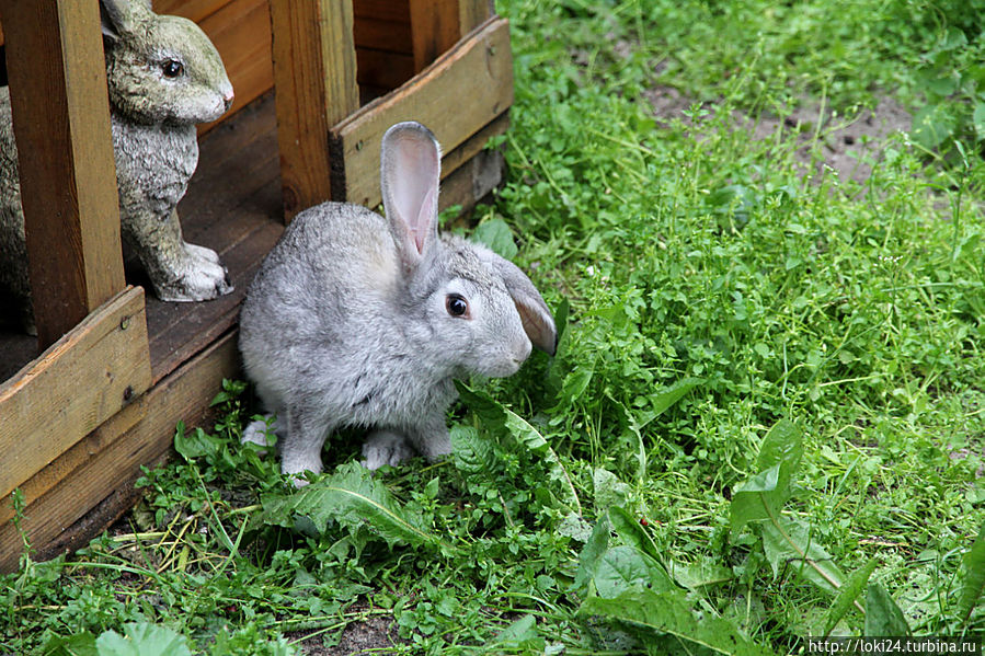кролики))