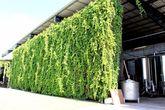 Микроклимат в производственных помещениях контролируется с помощью того же винограда