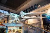Калининград. Музей мирового океана.