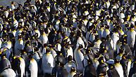 мой друг пингвин скажи мне братец что так задумчив что так тих что кровью сплёвываешь нервно и где полярник николай