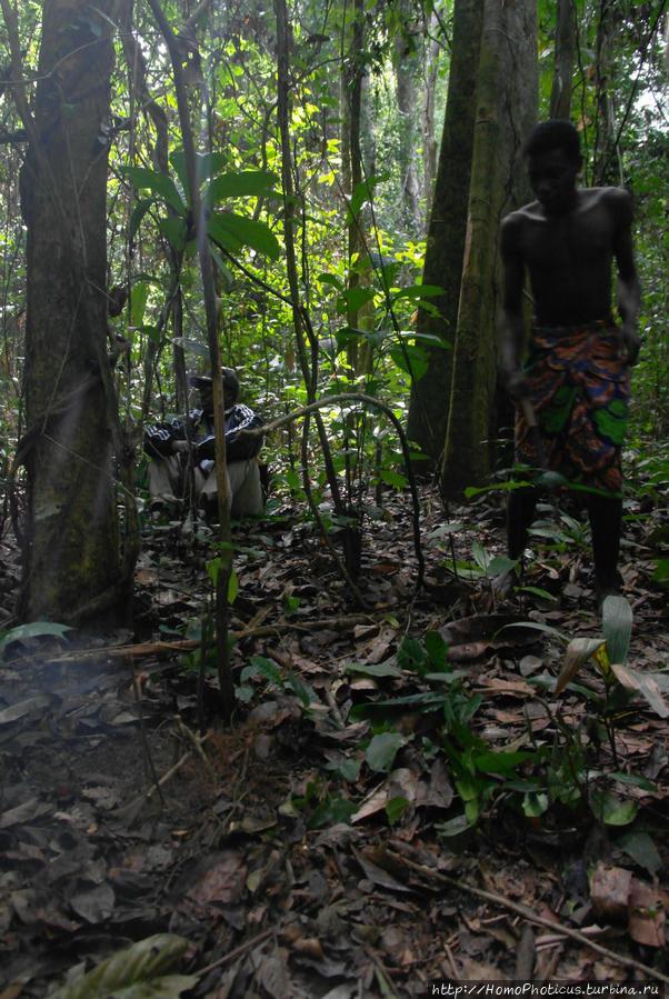 Хитроумная ловушка Джа Заповедник, Камерун