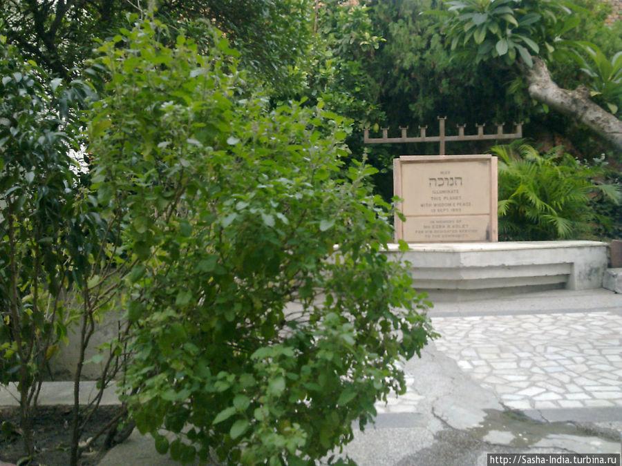 Во дворе синагоги растет священное для индусов  дерево Туласи (!)