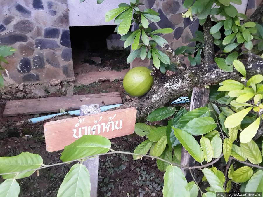 Фрукт в саду с названием только по-тайски