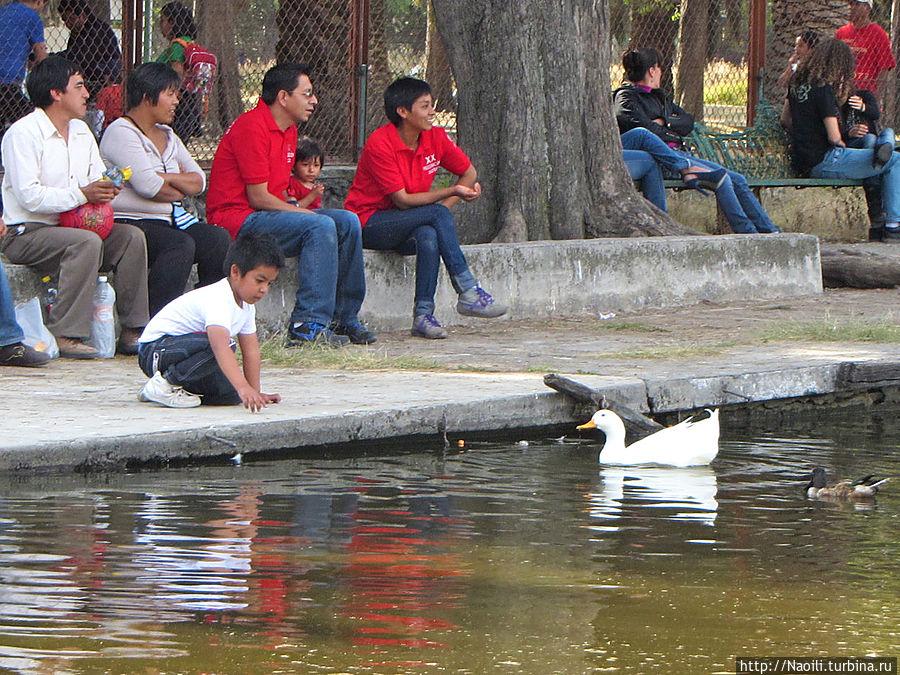 Есть так же белые более крупные утки