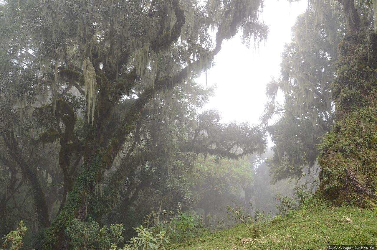 По Африканской рифтовой долине — Танзания Моши, Танзания