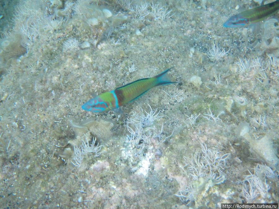 Самая красивая рыбёшка из тех, что плавают возле отеля