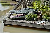 Крокодилы — тоже тайская тема. Чуть позже мы побываем на крокодиловой ферме... А пока завершаю первую часть прогулки. Во второй части мы догуляем по территории рынка и еще посмотрим на катания на слонах... *
