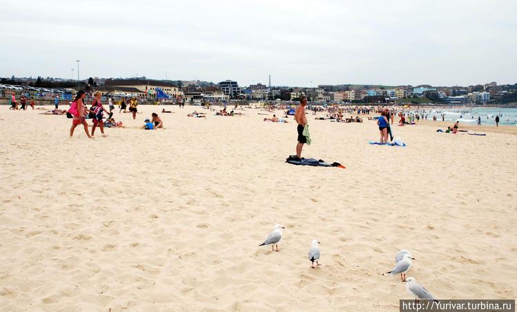 На пляжах Австралии никто