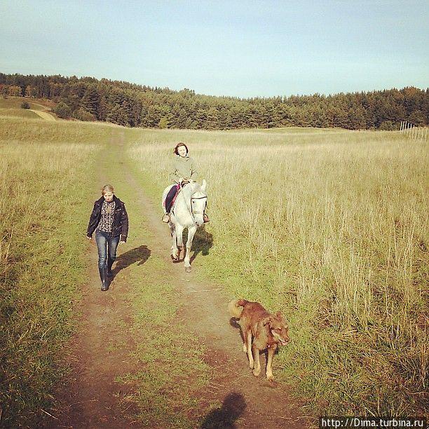Пёс, который живёт с лошадьми и всегда ходит на прогулки вместе с ними. Имени у него нет. Хотя он забавный.