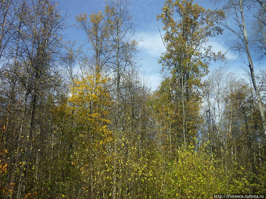 Знаменитый Брянский лес