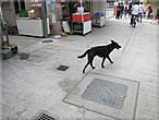 Эта собака сопровождала меня весь мой путь,я такую тощию собаку никогда  не видел