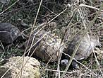 По иронии судьбы (беременная Лето) мы попали на любовные игры черепах. Я думаю, что такое увидеть выпадает не всем. Нам повезло.