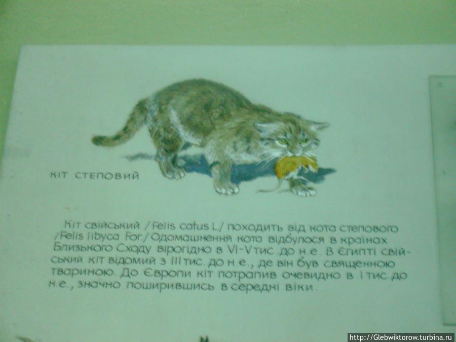 Національний науково- природничий музей Киев, Украина
