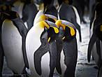 в пингвины вас принять не можем  и встаньте батенька с колен  напрасно вы надели ласты  и клювик из папьемаше