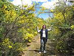 Цветущие акации в Национальном парке
