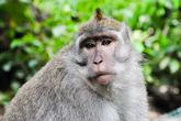 Чем не обезьяний рай?!   Оставляйте комментарии, добавляйтесь в друзья, или просто заходите в гости. Всегда Вам рад!