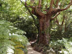 Ой, простите, если это не баобаб, но я подумала, что да, дерево огромное...