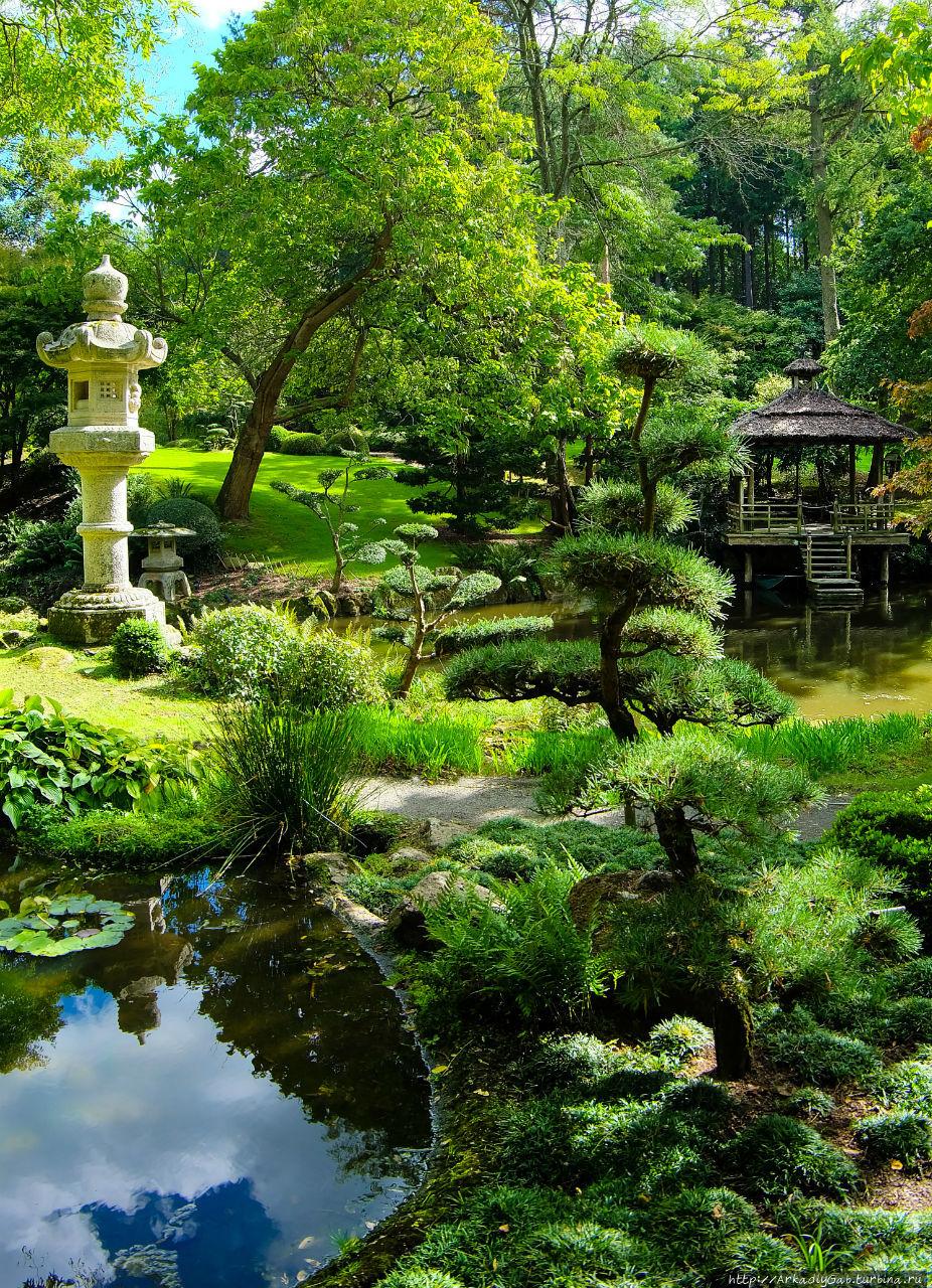 Японский сад в сетях луарской неги Молеврие, Франция
