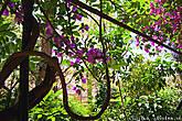 Цветы, зелень, солнце и лианы — ну чем не тропические джунгли? :)