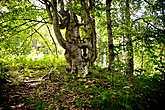 Вскоре зашли в таинственный лес, в котором нас встретили деревья невероятных форм, словно сошедшие со страниц Толкина.