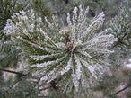 Поскольку здесь всегда высокая влажность, то при резком похолодании растения инкрустируются льдом.