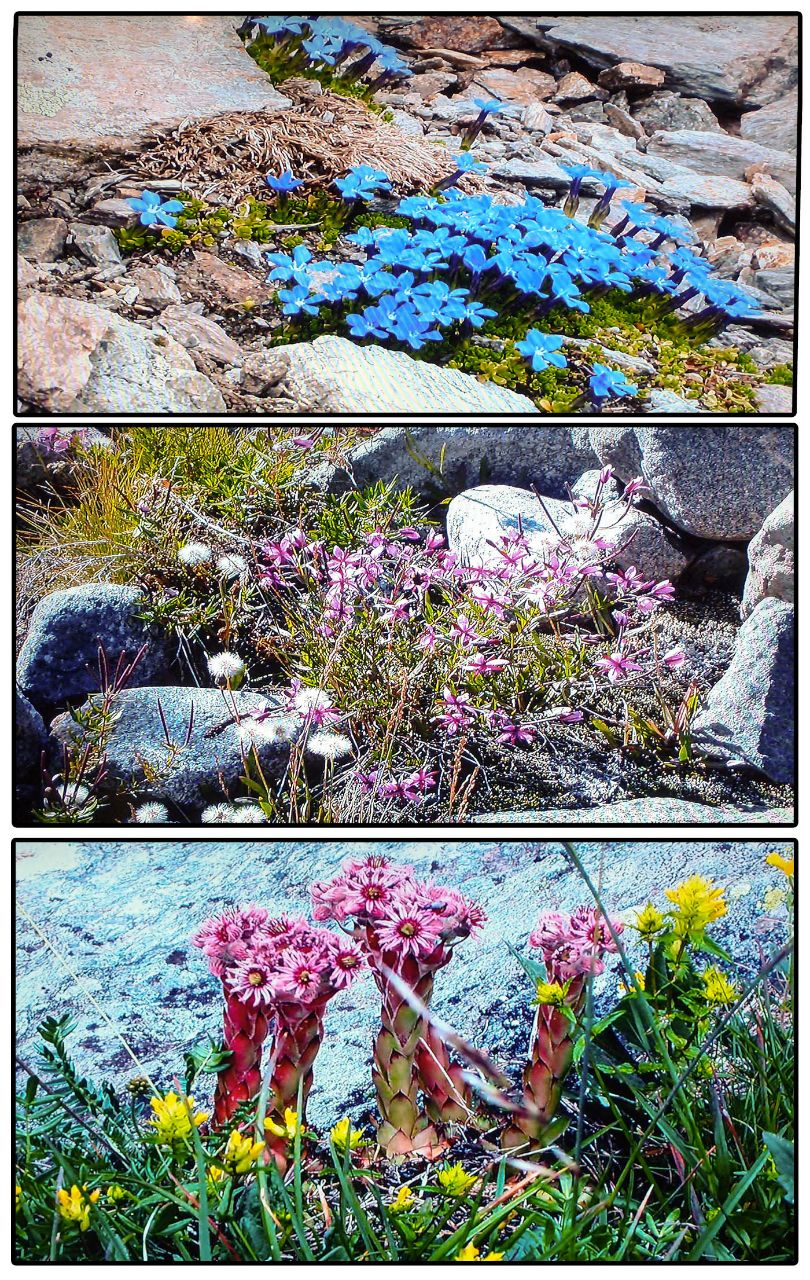 Ледниковый сад Люцерн, Швейцария