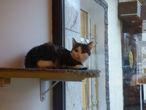 И ещё котик...