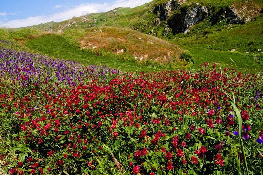 Фото сицилии цветы