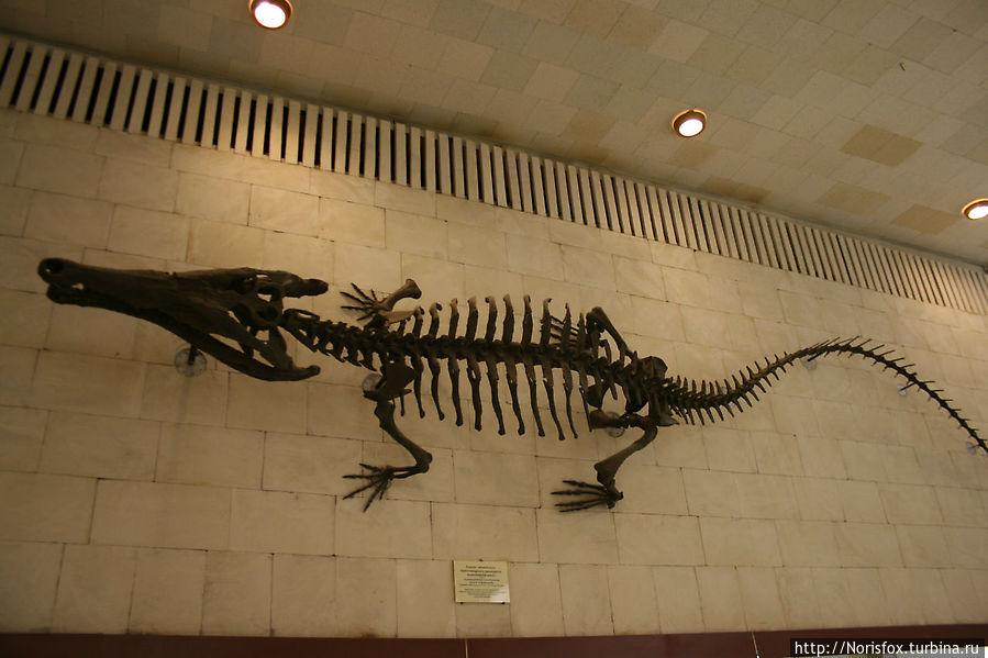 Скелет гигантского пресноводного крокодила Тойотамафимеи, обитавшего 1378 тыс. лет назад, как понятно из названия, в Японии.