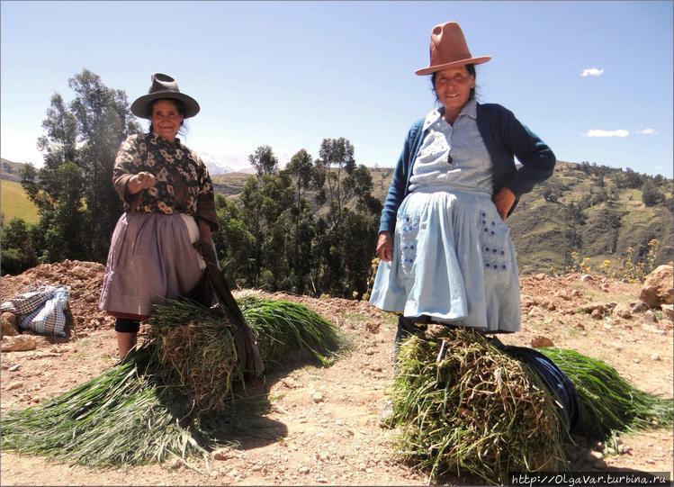 Сборщицы травы
