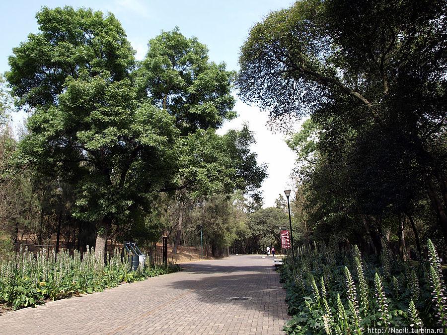 Алея Нетцауалкоатл — самая длинная прямая алея лесной части парка.