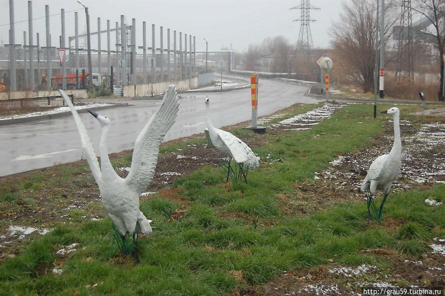 Птицы у монумента