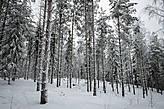 Финские суровые северные леса и природа