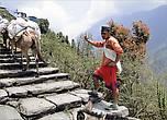 Перегонщик. Доставляют здесь товар из одной деревни в другую вот таким старым способом, навьючив осликов или мулов доверху