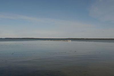 Лебеди предпочитают держаться подальше от берега