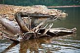 Отполированные деревянные кракозябры раскиданы по всему берегу