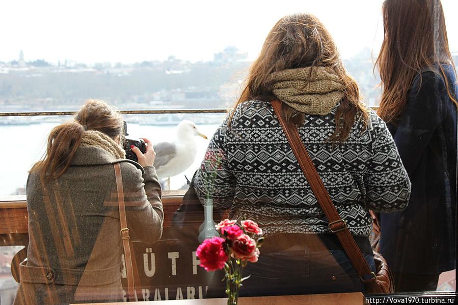 Туристы, очарованные чайками Галаты.
