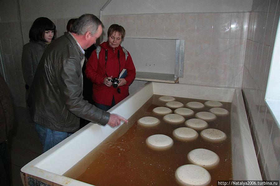 Владелец сыроварни проводит экскурсию. Ванна с рассолом.