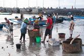 Выпутанную из сетей рыбу складывают в специальные плетеные корзины.