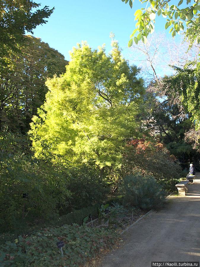 Часть деревьев пока еще и не думает сбрасывать листья