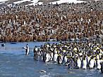 пингвин над прорубью склонился расставил крылья а другой его придерживая сзади май харт вил гоу он поёт