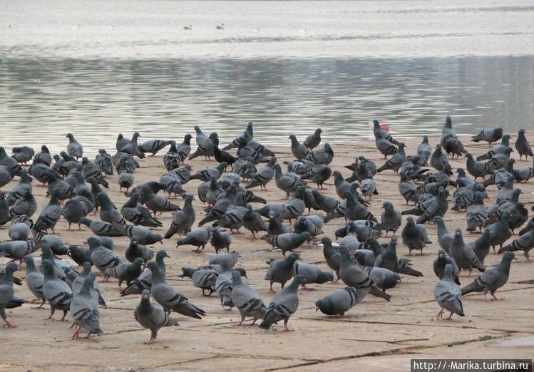 Священное озеро Пушкар, П