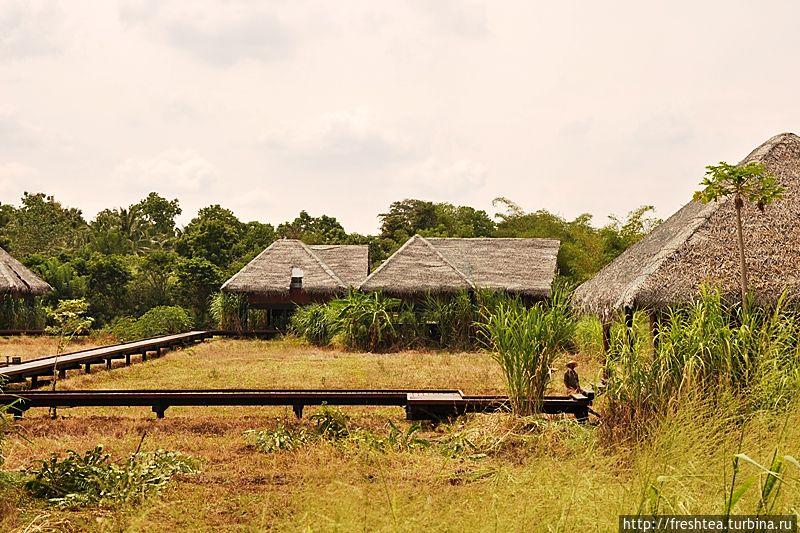 Бунгало Vil Uyana часто называют эко-лоджами над рисовыми полями: здесь и вправду круглый год выращивают рис, снимая 3 урожая в год. Если ваш визит придется на время жатвы, можно попробовать себя в роли жнеца или вязальщика снопов.