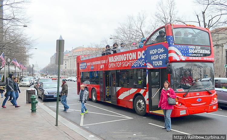 Так выглядят автобусы
