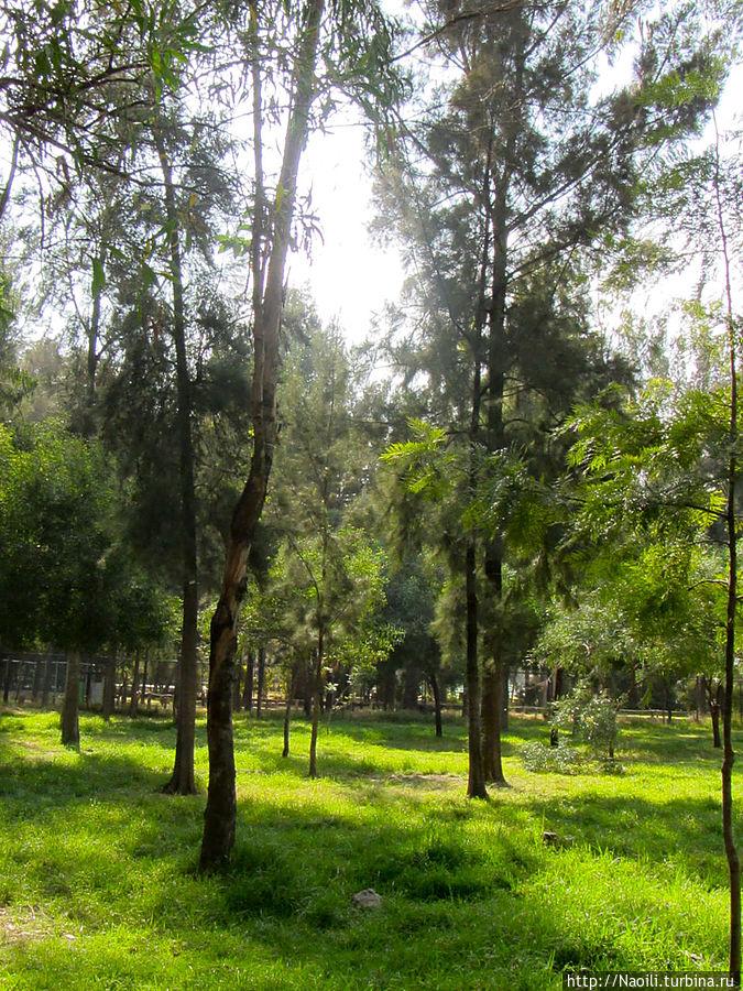 Это зеленый уголок парка, в котором удалось заснять кусочек леса без расположившихся на траве мексиканцев.